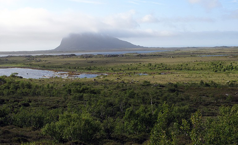 Grimsøya coastal brim, dominated by shrubs and trees. A mountain far in the background.